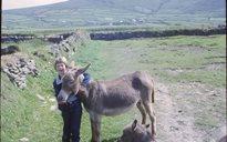 Livelihood and Housekeeping: donkeys