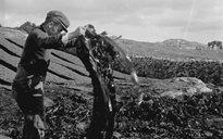 Slite Beatha agus Tíos: curadóireacht