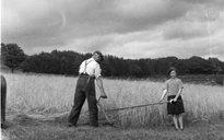 Livelihood and Housekeeping: harvest