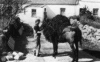 Cumarsáid agus Tráchtáil: iompar ualaigh (ainmhithe)