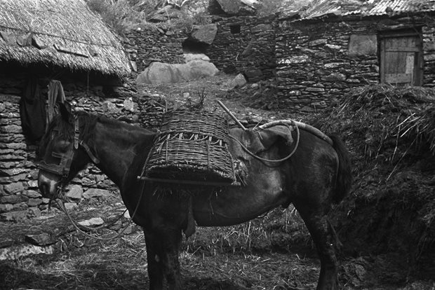 Communication and Trade: carrying loads (animals)