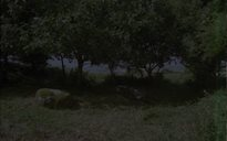 An Dúlra: carraigeacha