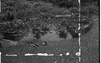 An Dúlra: lochanna
