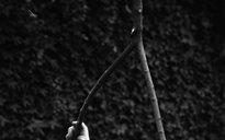An Dúlra: toibreacha