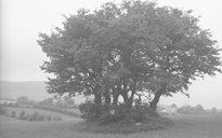 Nature: trees / bushes
